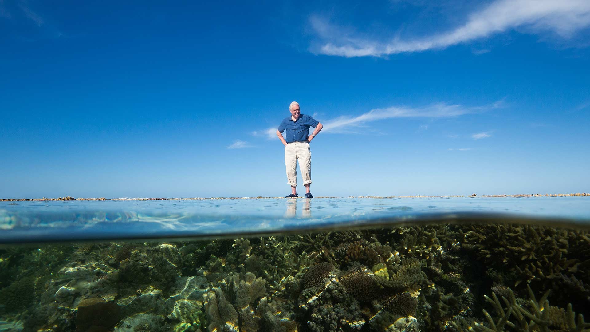 david great barrier reef edward mcgown freelance tv and commercials director